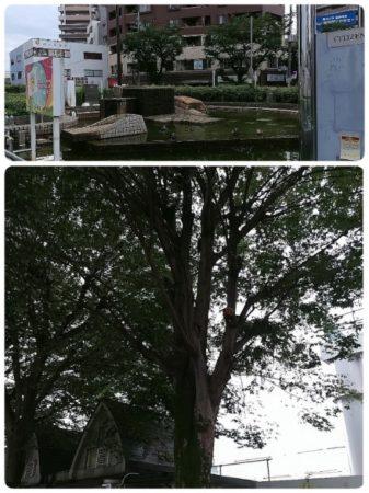 09_3本のケヤキの木